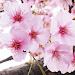 Download 草花の名前を覚える 1.3.4 APK