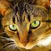 Download Cat Puzzles 2.0.15 APK