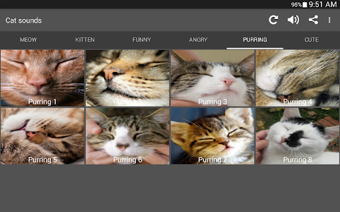 screenshot of Cat Sounds version 2.0
