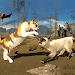 Download Cat Survival Simulator 1.1 APK