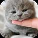 Download Cute Cat Wallpaper HD 1.1.1 APK
