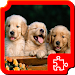 Download Dogs Puzzles 1.4.1 APK