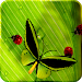 Download Friendly Bugs Free L.Wallpaper 2.3 APK