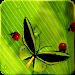 Download Friendly Bugs Free L.Wallpaper 2.3 APK