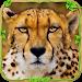 Download Wild Cheetah Adventure Sim ? 1.1 APK