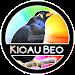 Download Kicau Beo Master HQ 1.0 APK