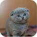 Download Kitten Sounds 1.2 APK