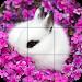 Download Puzzle - Cute bunnies 1.22 APK