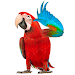 Download Real Talking Parrot 1.5 APK