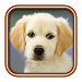 Download Talk To Your Dog 3.2 APK
