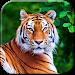 Download Tiger Live Wallpaper 7.0 APK