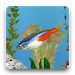 Download aniPet Freshwater Live WP 2.4.9 APK